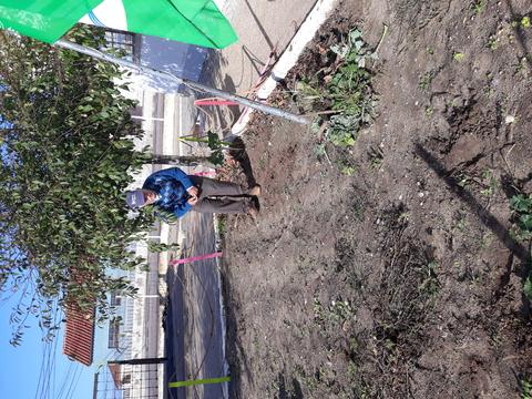 Limpeza do terreno (retirar as ervas e folhas secas)