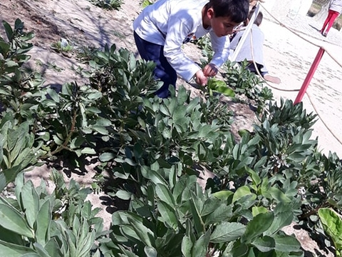 Os responsáveis cuidam de verificar se está tudo a desenvolver na sua horta biológica.