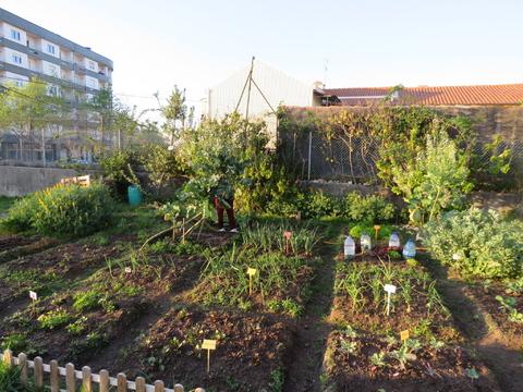 Vista geral da horta biológica.