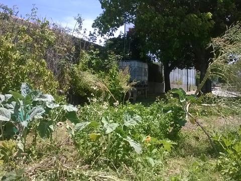 Aspecto geral da horta biológica.